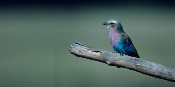 Colombia: Destino de Aves y Golf