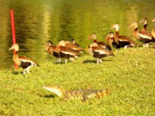 Fauna Silvestre (3er Día)