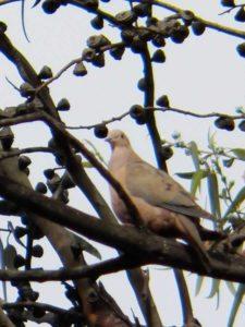 Avistamiento Aves CC de Bogotá 2do Día
