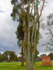 Árboles CC de Bogotá 2do Día