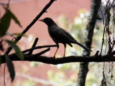 Avistamiento de Aves CC de Bogotá 3er Día