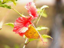 Flora & mariposa