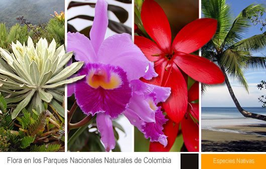 Colombia, la Marca País que Responde