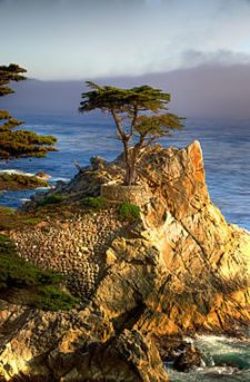 Lone Cypress (cortesía upload.wikimedia.org)