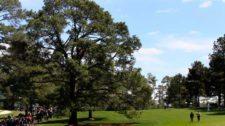 Eisenhower Pine (cortesía www.masters.com)