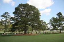 Eisenhower Tree (cortesía www.mulliganplus.com)