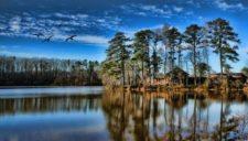 Lakeside trees (cortesía www.landscapehdwalls.com)