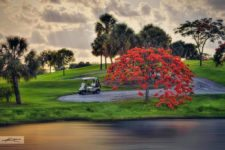 Poinciana Tree at Jupiter Golf Course