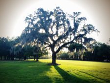 Winter Park Country Club Tree (cortesía floridavideographer.com)