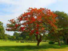 Nace una Nueva Cancha en Maracaibo