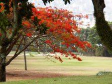 Acacias del Hoyo 15
