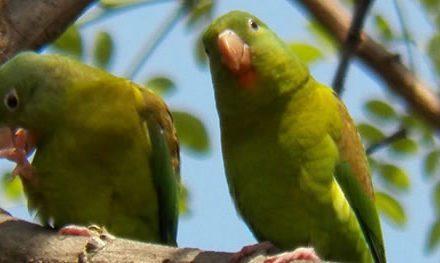 Las Aves de Blandín