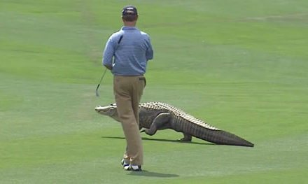 Video:  Top-10 Animales encontrados en el PGA Tour