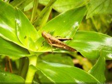 Insectos alimentan la vida y el golf