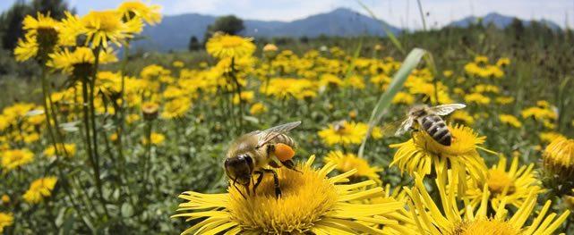 Beneficio de campos de Golf Roughs: Uso de insecticidas, conservación de polinizadores y Protocolos para la protección de abejas