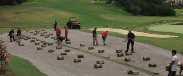 ¿Cómo seleccionar la mejor especie de grama para cada campo de golf?