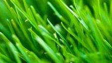 Efectos del clima sobre el desempeño de la grama (cortesía plus.google.com)