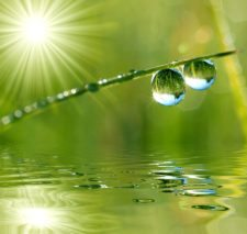 Efectos del clima sobre el desempeño de la grama (cortesía www.drjanicecaudill.com)