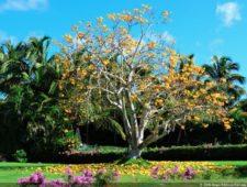 Flora local (cortesía Fairway)