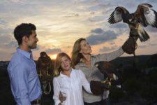 Falconry Las Colinas