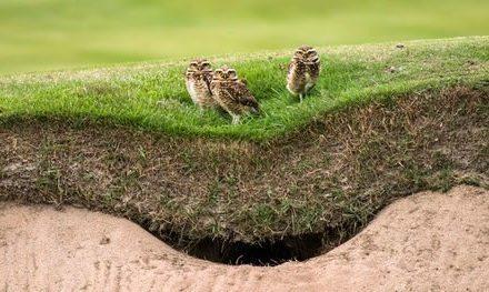 Cancha del Golf Olímpico recibe certificado ambiental