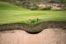 Cancha del Golf Olímpico recibe certificado ambiental (cortesía golfdigest.com)