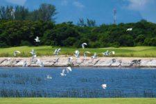 Cancha del Golf Olímpico recibe certificado ambiental (cortesía archysport.com)