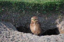 Buho (cortesía Chris Condon / PGA TOUR/IGF)