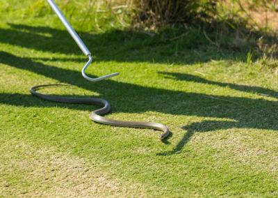 Intentando capturar una serpiente (cortesía Tristan Jones/IGF)
