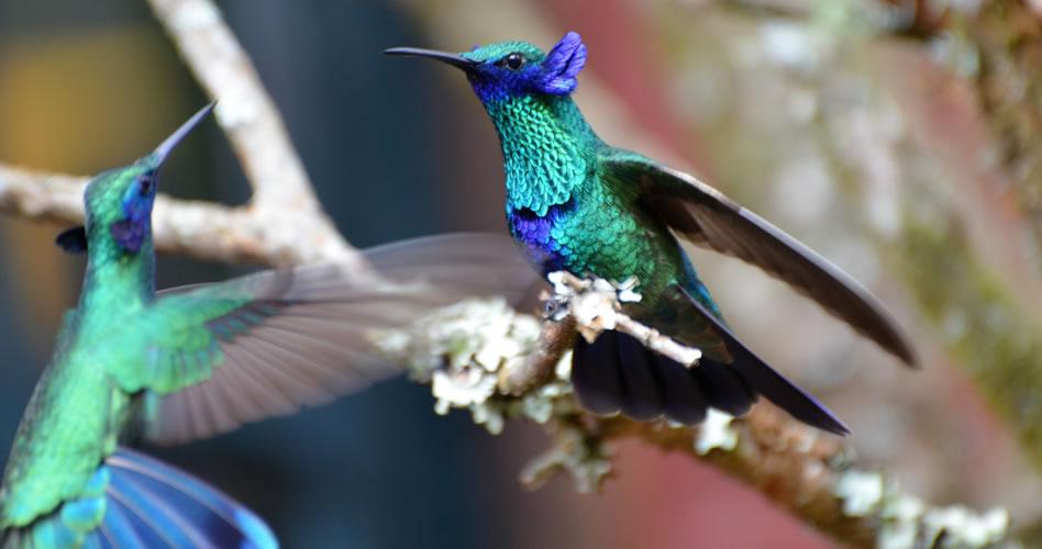 De nombres y de colibríes