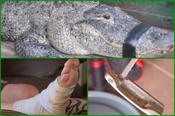 Video, golfista se salva del ataque de un caimán mientras jugaba al golf utilizando su putter