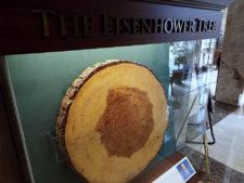 Ike Tree (cortesía KSAL.com)