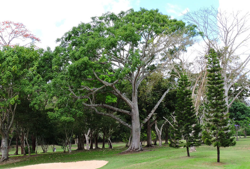Centelleo de triunfo para el Abierto de Golf Lagunita CC 2017