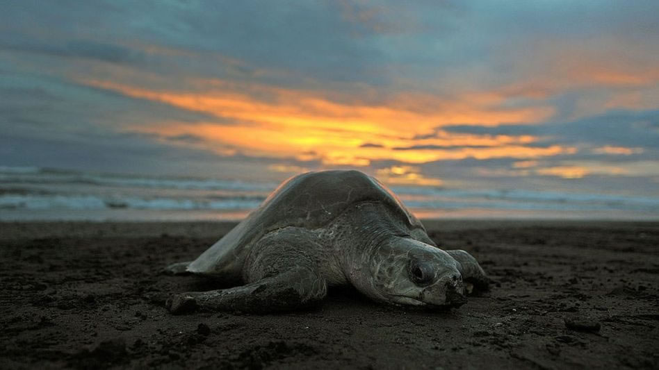 Costa Rica tiene dos parques nacionales declarados Patrimonio Nacional de la Unesco.