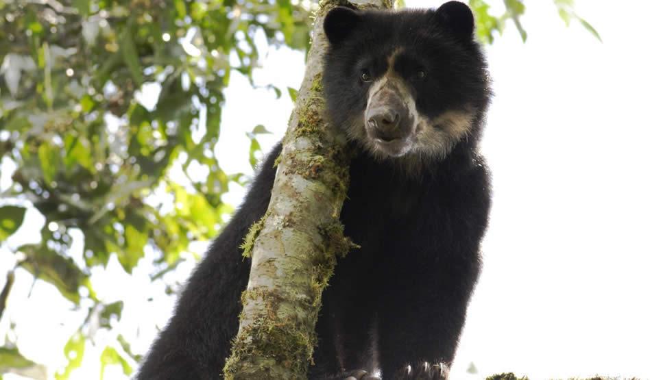 ¿Qué significa el hallazgo de un jaguar en Cundinamarca?
