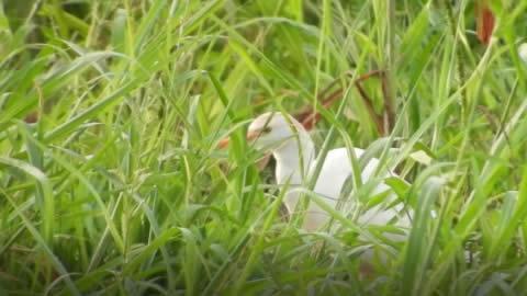 Colombia, # 1 en especies de aves y en turismo para su avistamiento