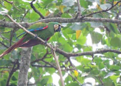 La naturaleza distintiva de Izcaragua es su vegetación