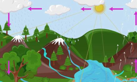 ¿Para dónde se va el agua? Ciclo del agua de riego