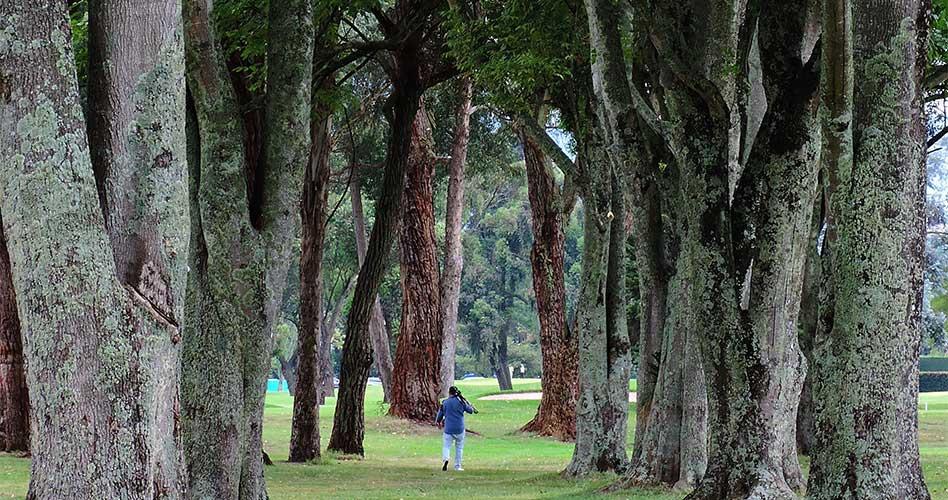 El centenario de algunos clubes de golf