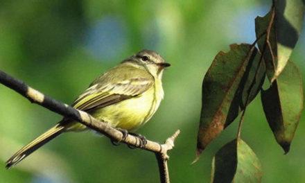 Proyectando el turismo: turistas que vuelan… tras las aves
