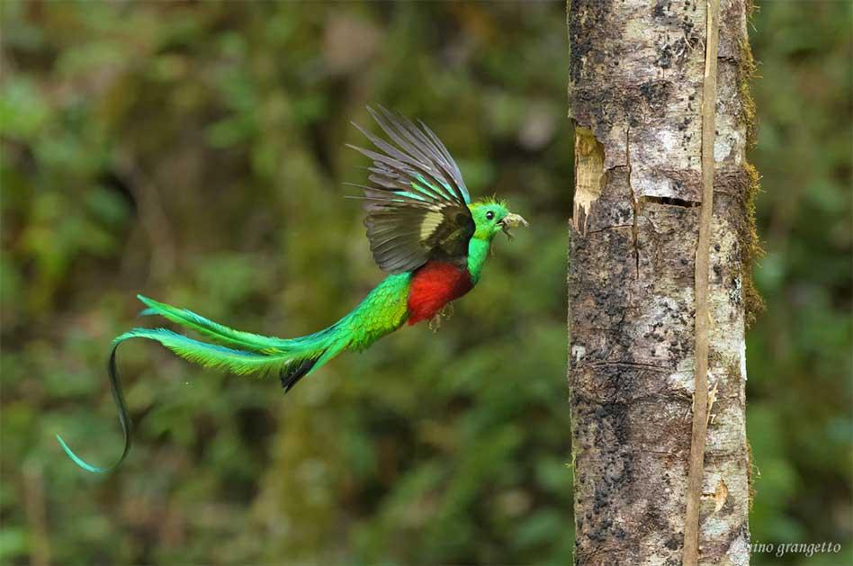 """El """"Quetzal Resplandeciente"""" como destino turístico en Guatemala"""