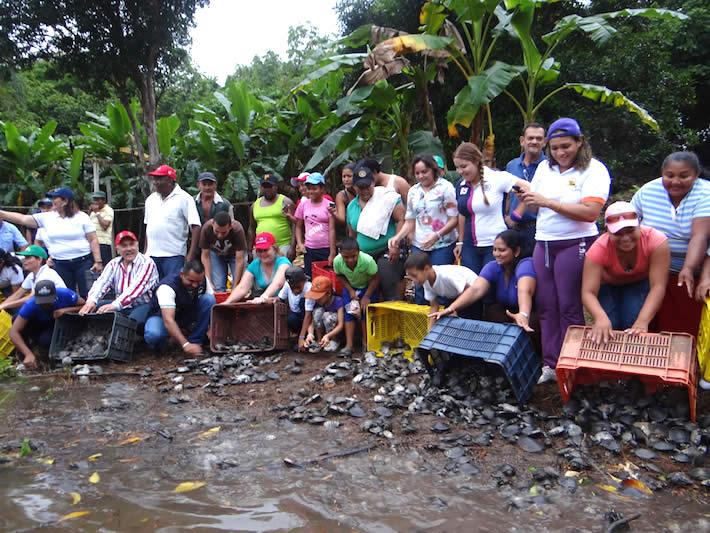 Crisis en Venezuela: la pelea por conservar manatíes, caimanes y tortugas