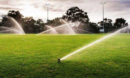 Evitar el exceso de riego para prevenir enfermedades de las plantas