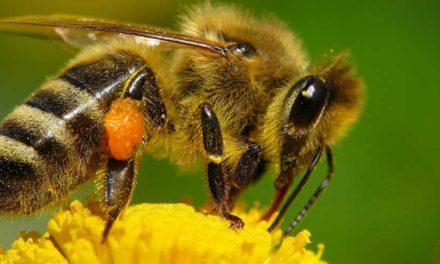 Protección de los polinizadores durante el uso de pesticidas